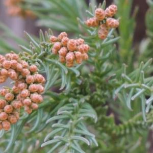 厳冬だが花粉は2月から飛散が本格的になる?