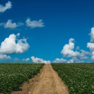 火星にジャガイモ畑が開拓できるか? NASAとペルー研究機関の実験