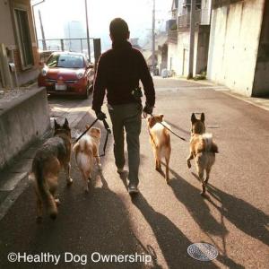 【心理学】人の振る舞いが変われば犬の振る舞いも変わる
