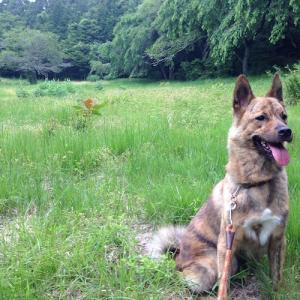 【犬との暮らし方】しつけでは治らない犬の問題行動