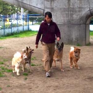 【犬との暮らし方】犬のリーダーになるってどういうこと?