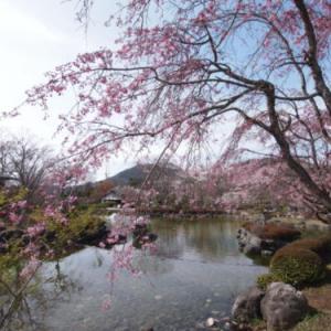 ちょっと足をのばせばまだ花見ができます--群馬県藤岡市・桜山公園