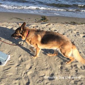 【犬との暮らし方】リラックスして歩かせるためには? 散歩のさせ方とマナー