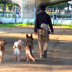【犬との暮らし方】犬に好かれる者がリーダーになる