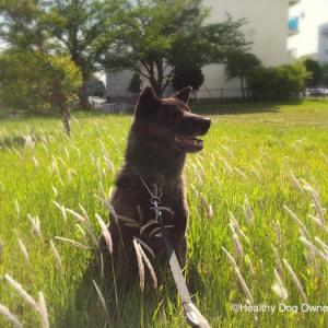 【犬との暮らし方】犬が幸せを感じる5つのこと