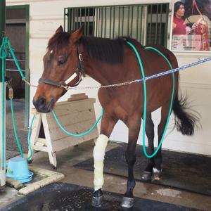 【週末おでかけ】G1馬にも会える! 洋式競馬発祥の地横浜・馬の博物館に行ってきた