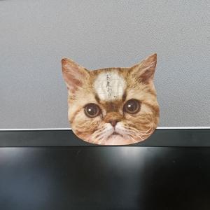 にゃんこのせま~いおでこに重要な連絡が! 『猫のひたい 付箋メモ』[オタ女]