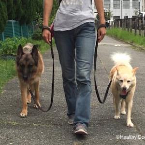 【犬の散歩】リードの「Jシェイプ」が意味するもの