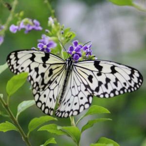 【奈良】橿原昆虫館で、蝶のはばたきを眺めよう!