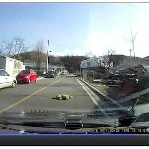 車道で昼寝をする犬の映像が話題に、クラクションを鳴らしても無視「轢けるなら轢けば?」