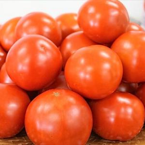 『カゴメトマトジュースプレミアム』は何がどうプレミアムなのか?畑と工場を見てきた!