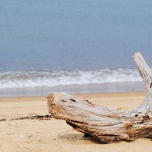 台風が来ると登場する珍バイト「海の拾い屋」とは?