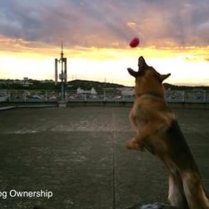 【犬】実録:訓練所で横行する動物虐待