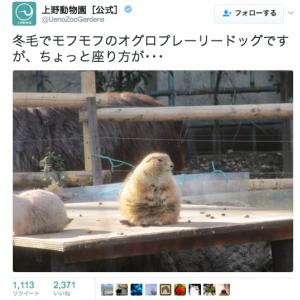 オッサン座りのプレーリードッグが可愛い! 「上野動物園」公式Twitterの冬の動物たちに笑顔