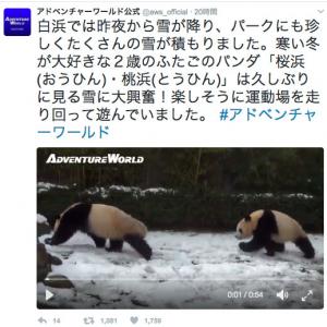 """""""熊猫""""だけど丸くなんてならねえ! 雪におおはしゃぎするパンダの動画が可愛い"""