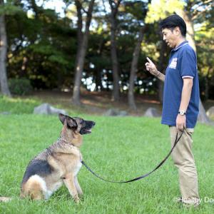 【犬】コマンド/キューは1回で伝える