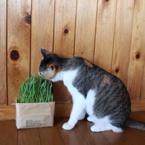 【猫の日】無印良品がすすめる猫アイテム5選