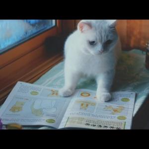 【ねこ動画】可愛いのに泣ける! 猫たちがお婆ちゃんを喜ばせるために内緒で勉強