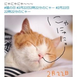 """【猫の日】""""にゃらん""""今年の「にゃー」はもう拝んだ? キュートな""""にゃら弁""""レシピも公開中"""