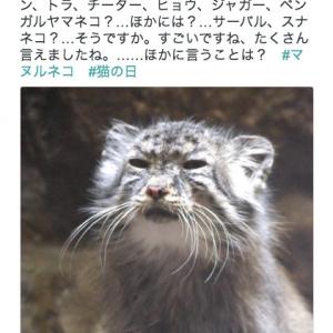 """「ボクのこと忘れてないかにゃ……?」上野動物園公式Twitterに投稿された""""マヌルネコ""""がやっぱりブサカワ"""