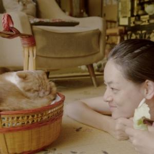 寂しい人にネコ貸します 荻上直子監督の貸し猫ムービー『レンタネコ』5月公開