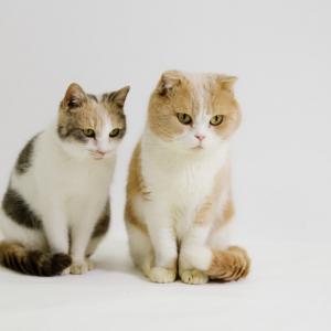 映画『ねこあつめの家』出演猫・シナモンちゃんとドロップちゃんにインタビュー! 悶絶級のかわゆさ