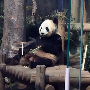 大混雑は必至!? 3月20日は上野動物園が開園記念日で入園料無料!