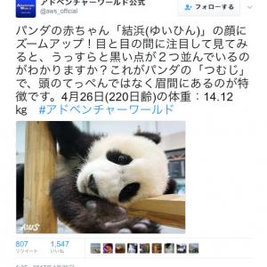 """衝撃の事実:パンダの""""つむじ""""がすごい場所にある"""
