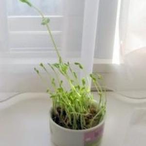 野菜が高いならおうちで野菜を育てよう!