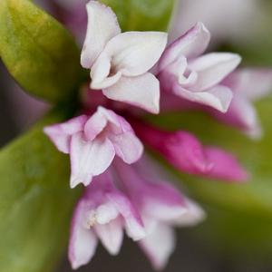 桜だけが花じゃない! よく見かける春の花々を楽しもう