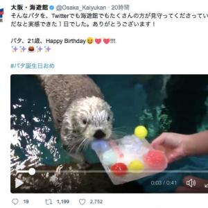 日本最高齢のラッコのパタ(21)が可愛すぎる! Twitterはモフモフ祭に