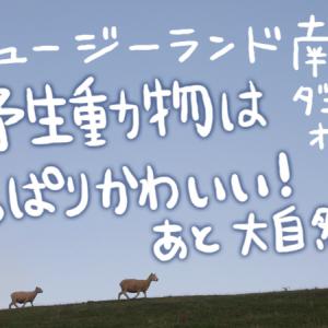 【ニュージーランド南島・その2】野生動物はやっぱりかわいい! あと大自然