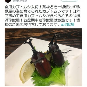 """【昆虫食】日本初!? """"食用カブトムシ""""に困惑 しかも成虫!"""