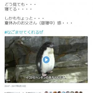 """【動画】赤ちゃんなのに""""おっさん""""ぽい? ペンギンの立ち寝姿がなごむ"""