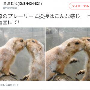 「プレーリー式挨拶」=キス! 『けものフレンズ』再放送でTwitterトレンド入りなど話題に