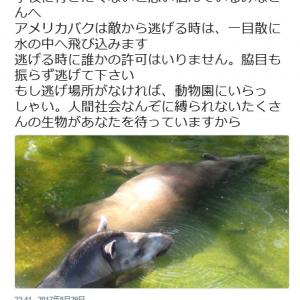学校に行きたくない人は「脇目も振らず逃げて下さい」 上野動物園の思いやりあるツイートに「救われた」「 涙があふれてきた」の声