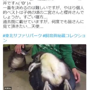 【動画】飼育員の秘蔵写真! ペンギンが仰向けに寝るレアな動画が話題に