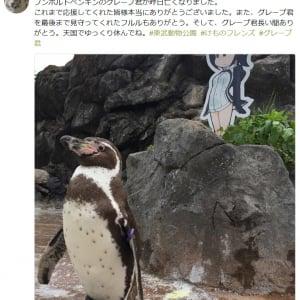 """『けもフレ』キャラに恋をしたフンボルトペンギン""""グレープ君""""死す ファンから悲しみの声"""