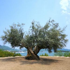たべる。いのち、めぐる。オリーブの島・小豆島、自然とのつながりを思い出す旅