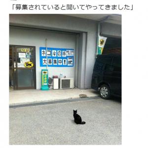 人材不足の宅配センターに救世主!? クロネコヤマトにやってきた猫がカワイイ
