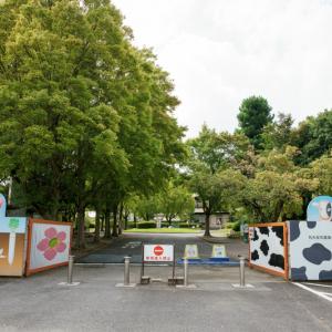 鶏肉の最高峰「名古屋コーチン」がお値打ちに食べられる超穴場店を発見!【究極TKG&親子丼】