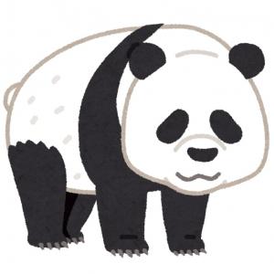 パンダはなぜあんなに無防備な姿勢なの? 竹の葉以外も食べるの? 専門家に聞いてみた