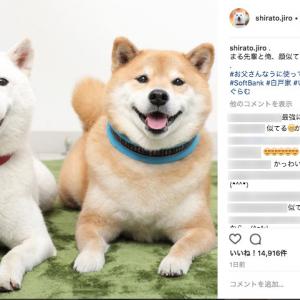 """お父さん&まるの""""日本犬""""コンビがかわいすぎるっ! カメラ目線でにっこりスマイル"""