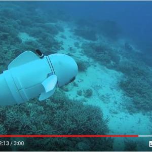 忍者の隠れ身の術ばりに擬態する魚ロボット『Sofi』 マサチューセッツ工科大学が動画を公開