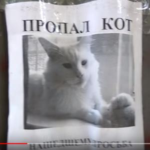 動画:コワイよー ポスターの中の行方不明のネコがずっとこっち見てるよー