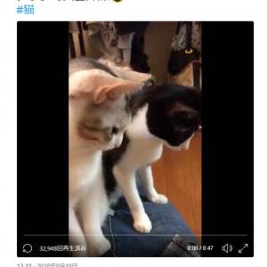 「シンクロ可愛すぎました」「見事なシンクロ振り」 2匹の猫動画に『Twitter』コメント集まる