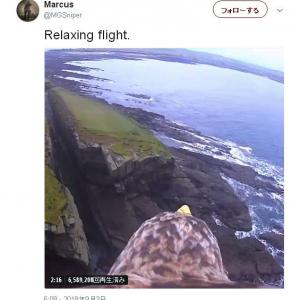 「あ~あ鳥になって自由に空飛べねーかなぁ」という妄想を見がちな人へ