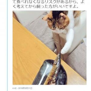 猫を飼うとさんまの塩焼きを落ち着いて食べれなくなると話題に「ドンだけ旬を味わおうとしているんだ」