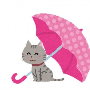 玄関で傘干してたら……? 「うちの猫もたまにあります」傘猫画像が続々集まる