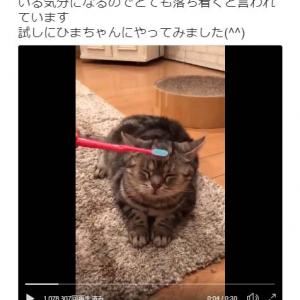 猫が歯ブラシで頭皮マッサージをされる動画が話題に「恍惚の表情」「わたしまで気持ちよくうっとり」